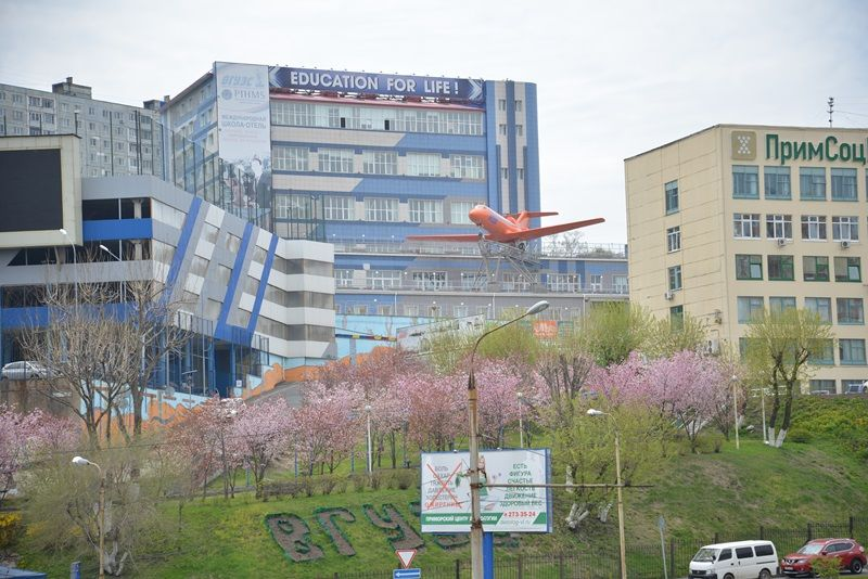 «Маленькая Япония» во ВГУЭС приглашает на цветение сакуры в университетский дендропарк и на выставку японской каллиграфии